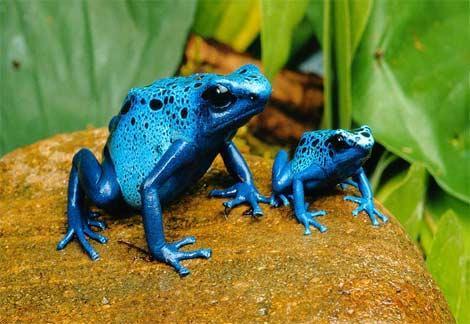 世界最毒最致命的生物有哪些?看过来涨见识了