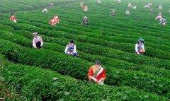 中国十大品牌茶是那些?最早的十大名茶排行揭晓