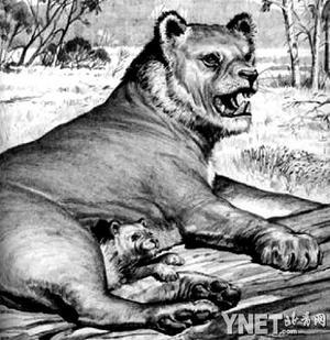 """世界最凶猛动物是什么?来自最""""凶残""""澳大利亚的袋狮"""