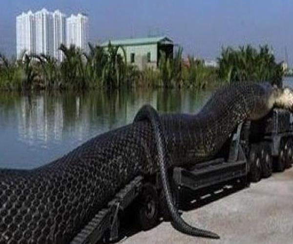 世界上最大的蛇,发现最长的蛇有哪些?