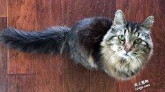 世界上最长寿的猫-Tiffany Two在27岁2个