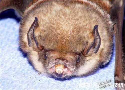 世界上十大最丑陋难看动物是那些?