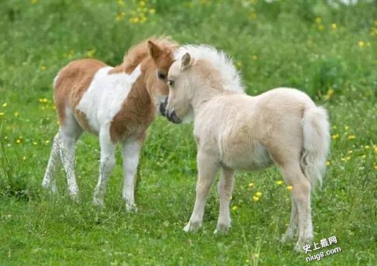 世界最美的马长的怎样,是什么品种?