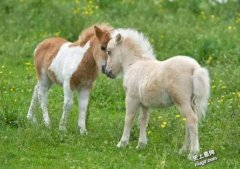 世界最美的马长的怎样,是什么品种