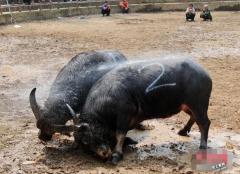 2015年超级牛散名单 详细牛散持股一览表
