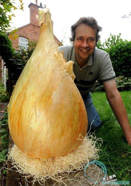 世界上最大的洋葱8公斤