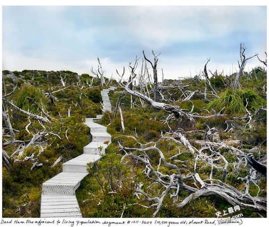 地球仍存活的最古老生物都有哪些