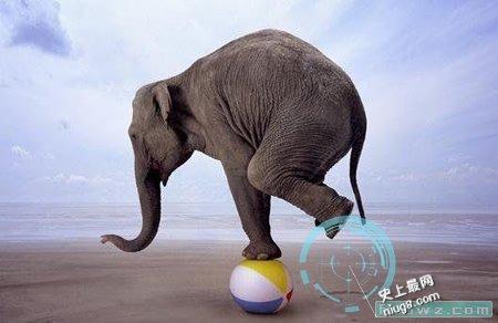 世界十大高智商的动物有什么