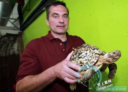 世界上爬行最快的乌龟伯蒂以19.59秒