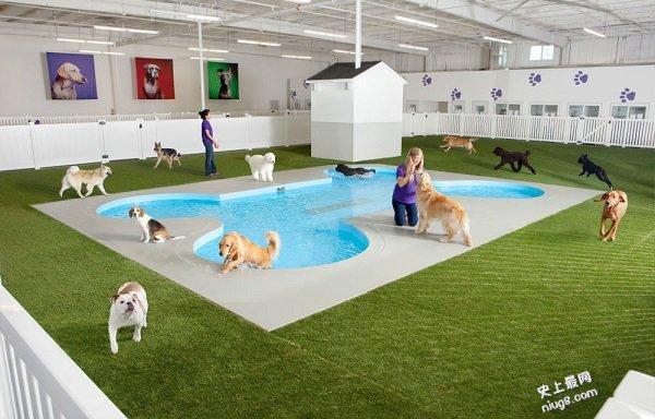 全球首座宠物航厦 带上心爱的宠物去旅行