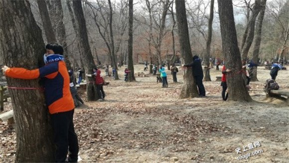 3月12日植树节有哪些最记录?