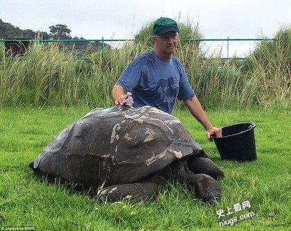 世界最老陆龟184岁的乔纳森(Jonathan)首度洗澡
