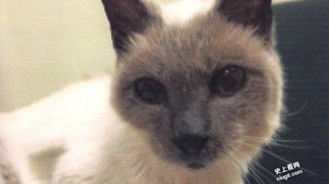 """世上最长寿猫30岁的""""史古特"""" 秘诀…保持活力"""