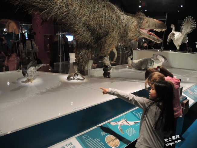 恐龙在身边 自然历史博物馆开展
