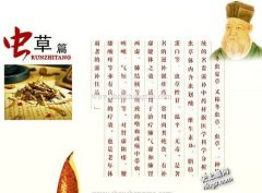 中国虫草世界最贵 比羊肚菌、松茸这
