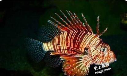 世界上九大最恐怖的鱼,绝对是稀奇古怪的神物