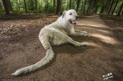 最新世界记录:超长宠物猫、最会跳骆