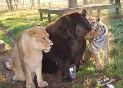 动物界里跨种族友谊,真的想不到牠