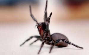 地球最毒的十种蜘蛛都有哪些?