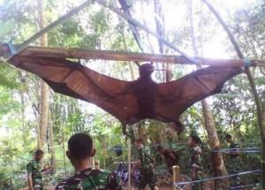 全球最大的蝙蝠在亚马逊雨林