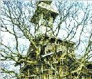 美国耗费11年打造世界上最高的树屋(图)