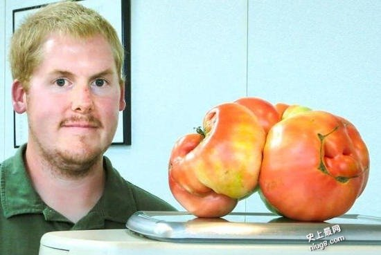 世界上最大的番茄重达4公斤来自美国西红柿