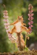 世界最可爱有趣的松鼠来自瑞典