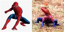 肯亚现实版蜘蛛人找到了?但不是人类而是...蜥